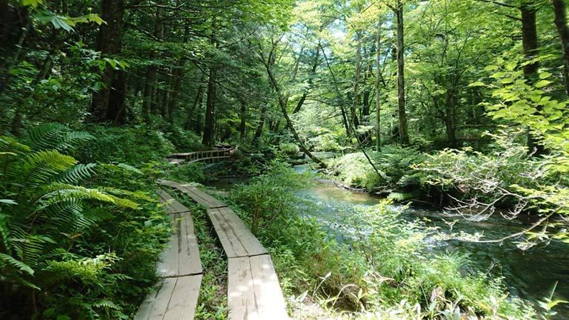 the way to Senjogahara from Okunikko