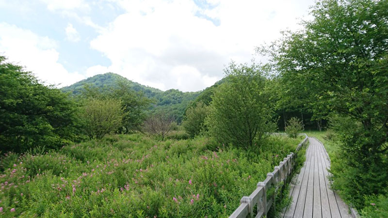 the way to Senjogahara and flower road