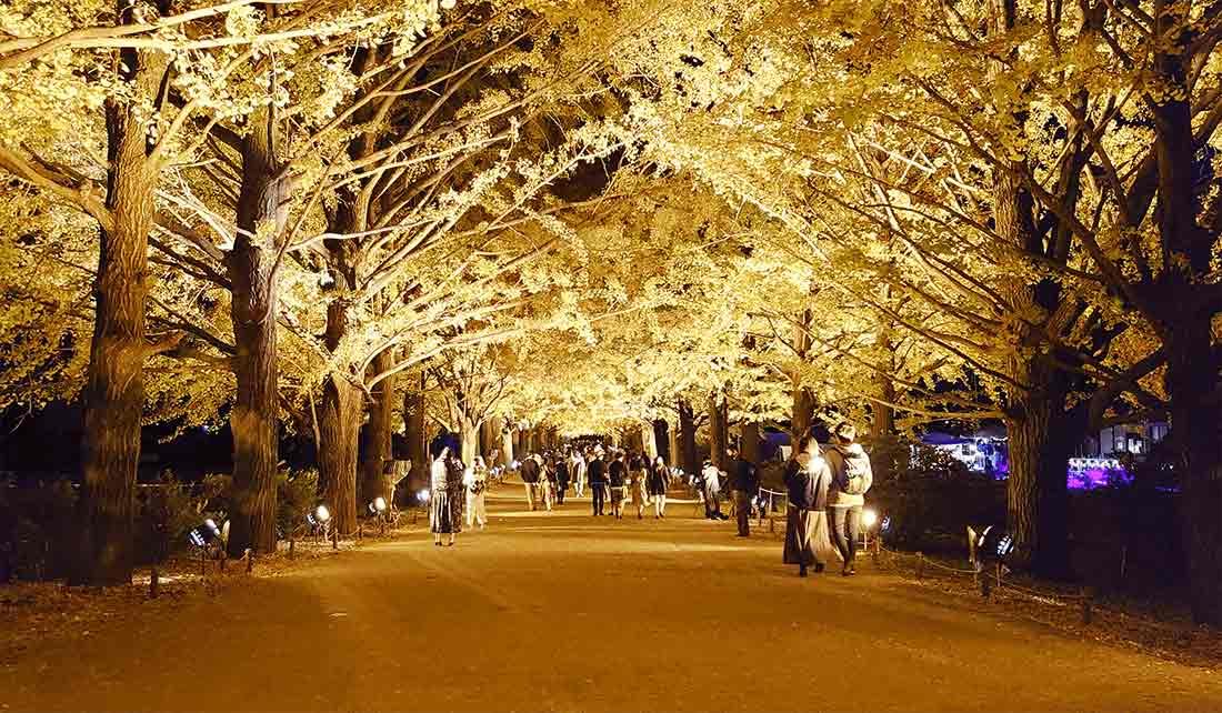 Ginko trees at Showa Kinen Park