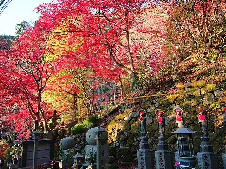 Autumn leaves in Oyama Temple