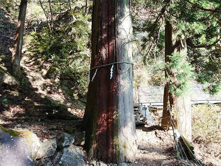 sacred tree at nizyu shrine